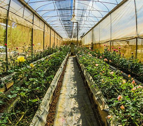 Convegno: controllo biologico in floricoltura