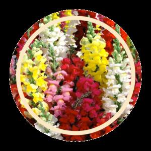 MRC FLOWERS