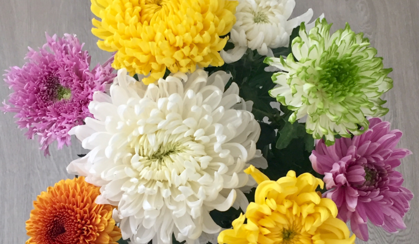Crisantemo: Dalla festa dei morti alla celebrazione della vita