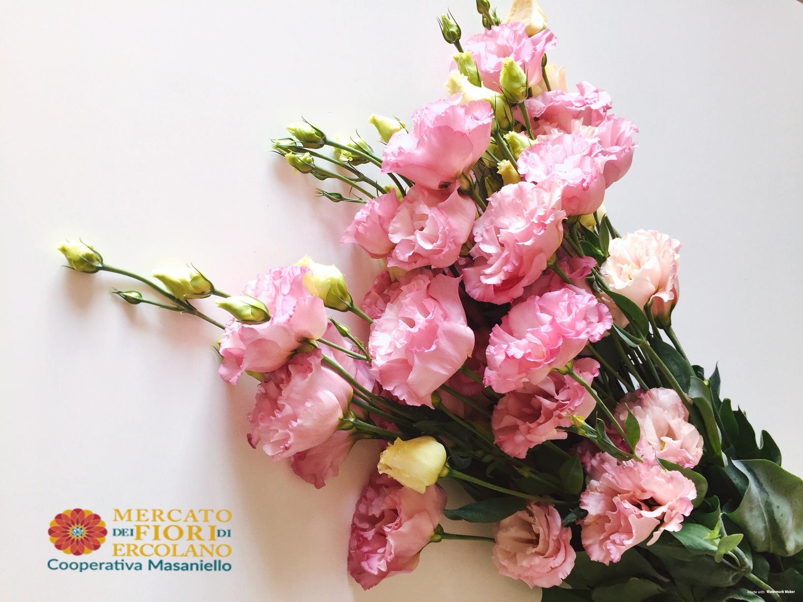 Le migliori 145 immagini su crisantemi | Crisantemi, Fiori ...