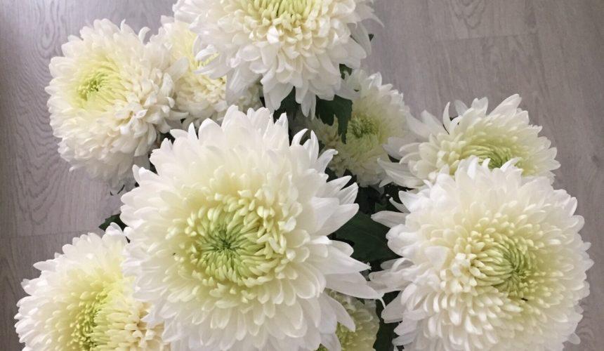 Crisantemo: Bello, Variato e molto Colorato